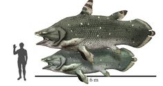 #Mawsonia, Prehistoric Coelacanth #Fish from the Cretaceous Period of Africa and South America, Compared with 1,8 Meter Tall Person | *Artwork by @Hyrotrioskjan published on #DeviantART.