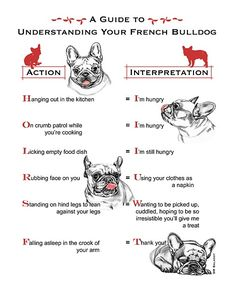 frenchie guide