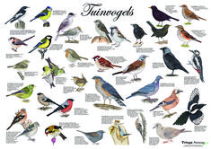 Latex Editor, Animal Totems, Beautiful Birds, Garden Inspiration, Pet Birds, Koi, Animals And Pets, Garden Design, Dog Cat