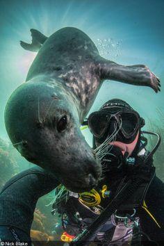 Selfies - 2 for 1 - Nick Blake's self portrait with an Atlantic grey seal