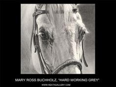 """""""Hard Workin' Grey"""" ~ Mary Ross Buchholz, Graphite & Charcoal x Horse Pencil Drawing, Horse Drawings, Animal Drawings, Pencil Drawings, Horse Artwork, Cool Artwork, Horse Paintings, Colorful Artwork, Horse Sketch"""