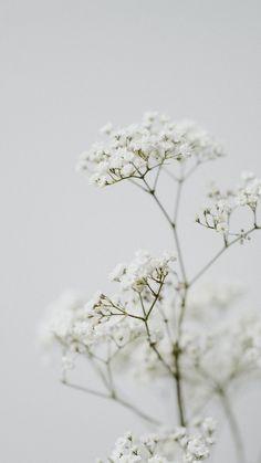 Minimal Wallpaper, Iphone Wallpaper Tumblr Aesthetic, Iphone Background Wallpaper, White Wallpaper, Aesthetic Backgrounds, Aesthetic Wallpapers, Wallpaper Nature Flowers, Beautiful Nature Wallpaper, Flower Wallpaper