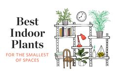 The Best Indoor Plants for the Smallest of Spaces