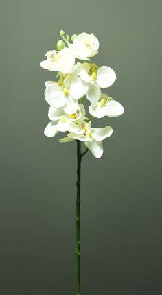 http://kunstbloemenennaaldhakken.nl/product/orchidee-phalaenopsis/ Zonder blad, 7 bloemen, 3 knoppen  50 cm Kleur: wit