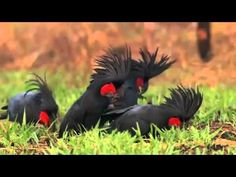 Discovery Channel | Animal Planet 2015 | Wild Life Documentary | National Geographic Wildlife #6