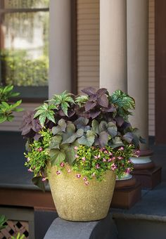 A rich tapestry of foliage plants can really dress up a porch filled with neutral tones. This recipe of plants is called Precious Opal.