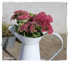 Havets Sus, Ib Laursen, my garden, flowers