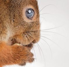 Un photographe immortalise sa relation privilégiée avec les petits animaux sauvages qu'il rencontre | Daily Geek Show