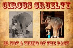 is the circus cruel   circus_elephant_cruelty_poster.png