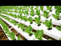 How to Start Hydroponic Gardening As A Beginner ~ Bees and Roses