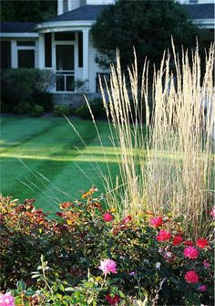 How to Trim Shrubs i