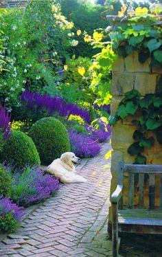 Brick pathway, purple flowers, bench at garden wall.
