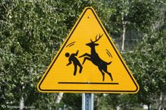 """okay, this is a REAL road sign - It means """"Combative deer crossing"""" Watch it now. Bizarre Animals, Funny Animals, Cute Animals, Deer Crossing, Animal Crossing, Bambi, Deer Hunting Season, Funny Road Signs, It Goes On"""
