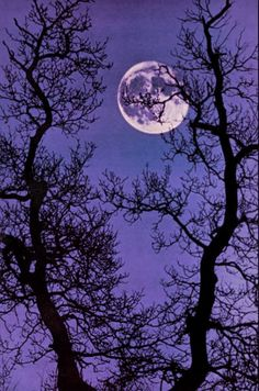 Many a painting, drawing and quilt of mine has featured the moon behind tree branches...