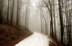 Forest Path in Winter - Most Beautiful Picture Foggy Forest, Forest Path, Forest Road, Forest Pictures, Nature Pictures, Most Beautiful Pictures, Beautiful Places, Amazing Places, My Fantasy World