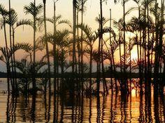 Beautiful sunset in the Cuyabeno jungle of Ecuador