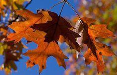 autumn-britain1_1736353i.jpg (620×400)
