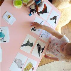 Шичида, развитие зрительной памяти и внимания - Раннее развитие - Babyblog.ru