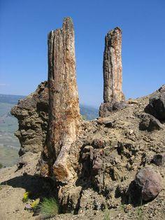 yellowstone river petrified wood | Yellowstone's Petrified Forest