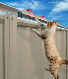 Cat Care The Oscillot® System truly is an investment in your peace of mind, keeping your feline family members safe at home in their own cat-proof yard. Anti Chat, Diy Pour Chien, Cat Fence, Outdoor Cat Enclosure, Cat Run, Cat Garden, Outdoor Cats, Cat Life, Crazy Cats