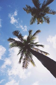 I would give up every Evergreen tree for some palm trees.
