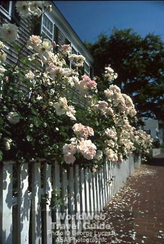 Edgartown is known for the beautiful flowers that can be seen everywhere throughout the town.
