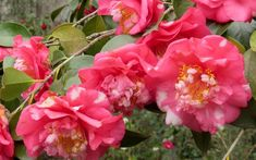 Gardening Tips: The 6 best February flowering plants for your winter garden - David Domoney Winter Flowering Shrubs, Deciduous Trees, Flowering Plants, Pink And White Flowers, Hardy Plants, Blooming Plants, Winter Colors, Season Colors, Winter Garden