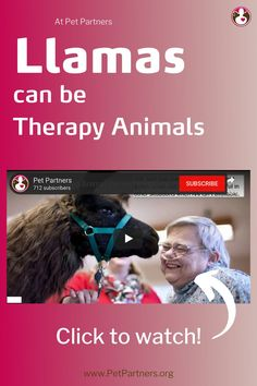 Volunteer With Your Llama | Pet Partners | Llamas can be therapy animals with Pet Partners. So we've created a webinar to give you all the information you need to know. If your pet llama enjoys people and seeing the world, they might be a good fit for our therapy animal program. We have everything you need to get started volunteering as a therapy animal team with Pet Partners. To find out if you and your pet llama would make a good therapy animal team, go to PetPartners.org.