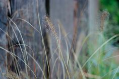 Grasses planted in front of railway sleeper wall