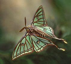 https://www.google.com/search?q=purple moth in flight