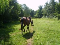 A Different Kind Of Turnout; Paddock Paradise | EcoEquine