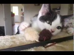 KITTENS - YouTube His Eyes, Kittens, Action, Creative, Youtube, Cute Kittens, Group Action, Kitty Cats, Baby Cats
