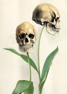 Skull Tulip- I'm not usually into morbid art, but something about this just struck me as beautiful.  Would this be weird in a bathroom?!