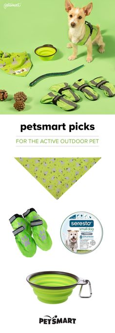 Got an active outdoor pet? We can help you get ready to hit the trails! Murphy, the adopted Cairn Terrier/Jack Russell mix, shows off his favorite things for summer activities. #greatoutdoors #petsmartpicks