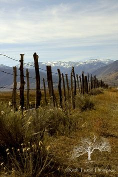 country fences on pinterest   fence line in the Eastern Sierras