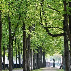Tree Canopies are Nature's Art Tree Canopy, Walk In The Woods, Canopies, Awesome Things, Nature, Plants, Trees, Beautiful, Design