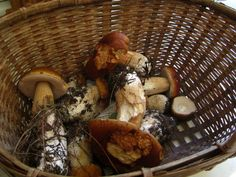 Wild Mushroom Season: A Forager's Guide