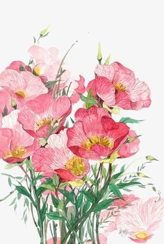 Latest Absolutely Free Pink Flowers watercolor Style A red-colored increased is a pretty common image of affection in addition to passion. So worldwide, the truth Watercolor And Ink, Watercolor Flowers, Watercolor Paintings, Watercolors, Botanical Illustration, Watercolor Illustration, Floral Frames, Flower Aesthetic, Flower Backgrounds