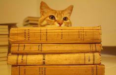 Il mio piccolo aiutante, il vice-libraio Gatto Marcello esamina dei volumi d'epoca appena arrivati... www.barbacanelibri.it