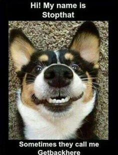 Humorous Animals 2015 (5:47:43 PM PST Thursday, February 12, 2015) – 10 pics