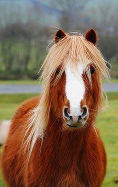 Pony beauty