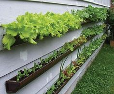 Eave trough garden. YES! Staggered. On the fence/garage. Trailing petunias, small veggies...need to try them all.