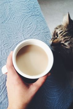 Repinning so I can do this with my animals, next time I make a cup of coffee or tea.