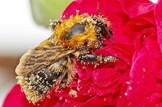"""All'apice della stagione delle fioriture più importanti, ci ricordiamo che tutto questo è il dono di una piccola, essenziale """"madre"""", l'Ape Regina, l'unica ape feconda dell'alveare, da cui dipende interamente la riproduzione."""