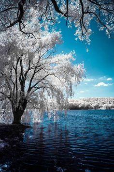 Winter near Elmira New York / Enchanted Nature