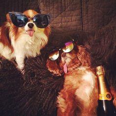 I woke up like this  @toastmeetsworld #flawless #rich #dog #rdoi #luxury #woof #canine #campaign #for #champagne #barking #bubbly  #richdogsofinstagram #champagneshowers #puppy #party #hound #hangover #ballsohard #getlikeme #cantseethehaters #stunnershades