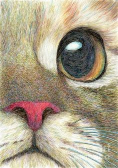 The Face-detailed drawing of a cute cat's face, by Jingfen Hwu, aqua colored pencil, #jingfenhwu