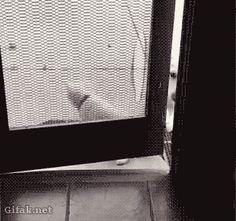 Kawaii Cute Dogs Cats and