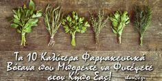 Herbalism, Herbs, Backyard, Garden, Plants, Food, Homework, Tips, Herbal Medicine