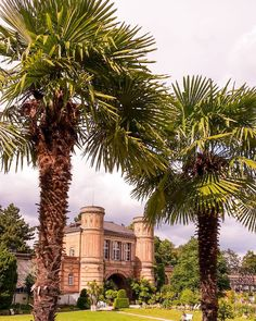 Wenn jetzt noch die Sonne raus kommt dann ist es im Botanischen #Garten doch fast wie im Urlaub oder?  #visitkarlsruhe #visitbawu #bwjetzt #placetobw #karlsruhe #botanischergarten #botanical #garden #palmen #palms #clouds #cloudporn #beautiful #city #citylife #amazing #instalike #picture #pictureoftheweek #travel #travelblog #instatraveling #holidays #feelslikesummer